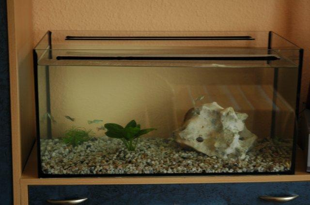Einsteiger aquarium welche fische oder krebse oder schne for Aquarium einsteiger